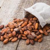 Kakaobohnen und Nibs